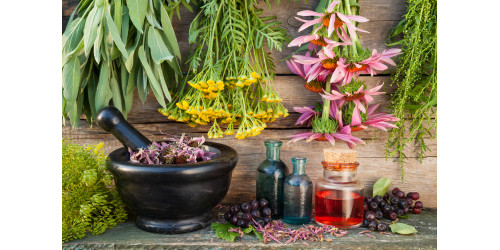 A HERBAL POULTICE: HOW TO PREPARE AND USE IT