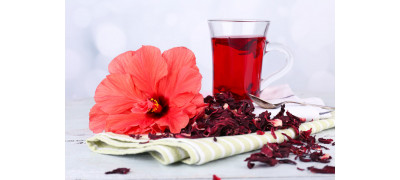 WHAT DO YOU KNOW ABOUT HIBISCUS?