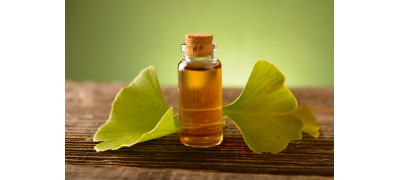 ALL YOU NEED TO KNOW ABOUT GINKGO BILOBA