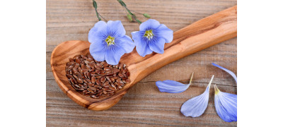 FLAX SEEDS FOR A HEALTHY LIFE