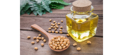BENEFICIAL PROPERTIES OF SOYBEANS