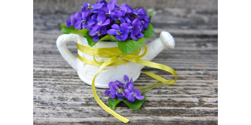 FABULOUS BENEFITS OF VIOLA ODORATA