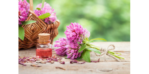 WHAT EVERYBODY OUGHT TO KNOW ABOUT RED CLOVER