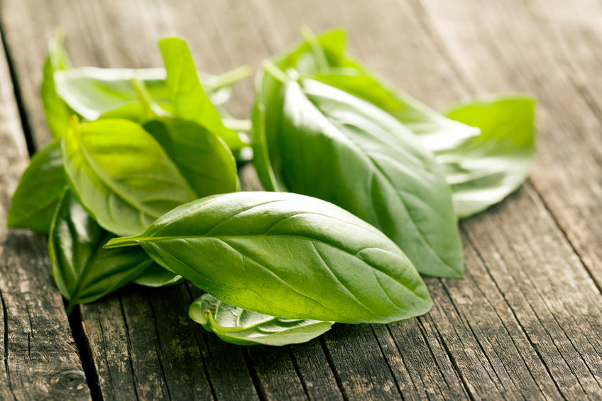 USEFUL BASIL