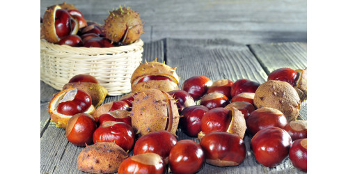 EVERYTHING YOU NEED TO KNOW ABOUT HORSE CHESTNUT