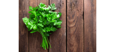 WHY IS PARSLEY SO BENEFICIAL?