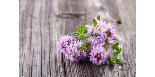 AROMATIC AND BENEFICIAL THYME