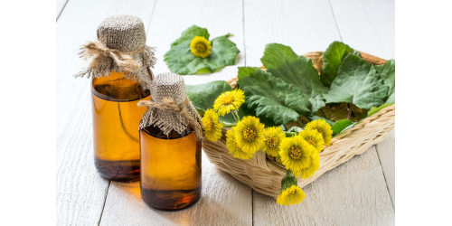 COLTSFOOT FACTS AND BENEFITS