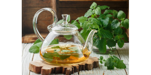 FRAGRANT LEMON BALM: A CURE FOR BOTH MIND AND BODY