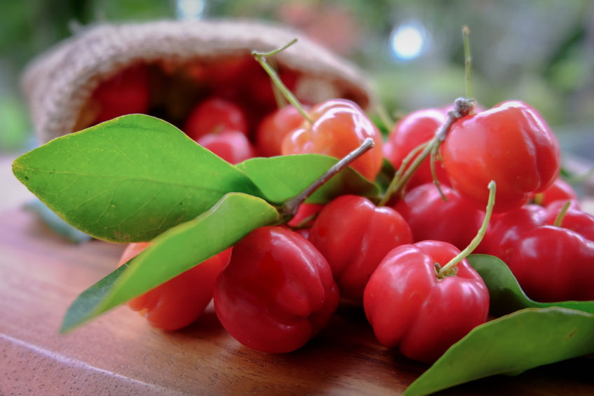 ACEROLA, OR BARBADOS CHERRY