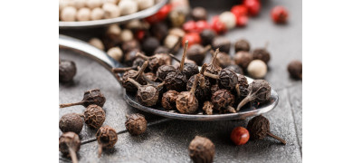 CUBEB: THE SPICIEST OF ALL PEPPERS
