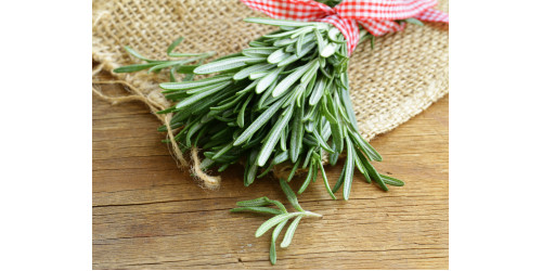 THE POWER OF ROSEMARY